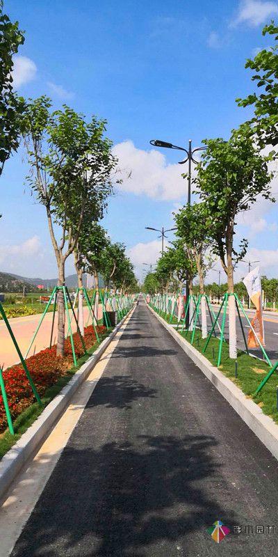 广东珠海海绵城市道路绿化工程